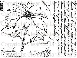 PoinsettiaDecFOMjpg